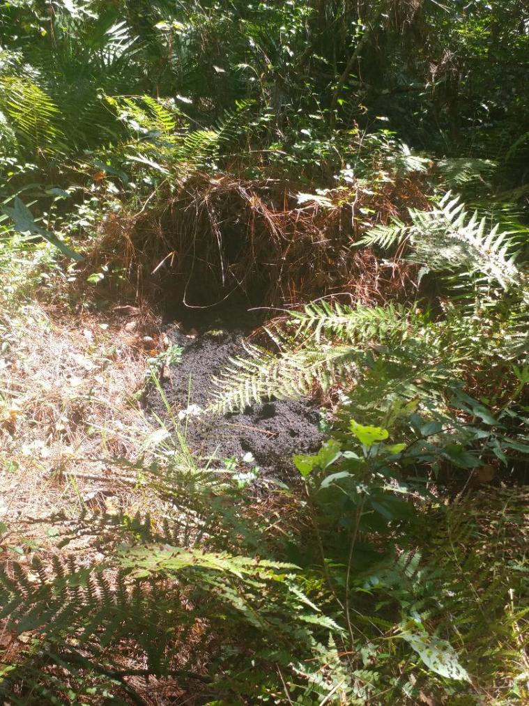 Gator nest.jpg