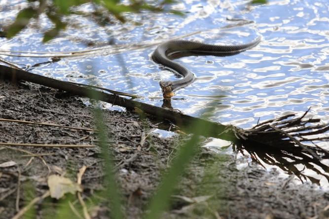 !Snake