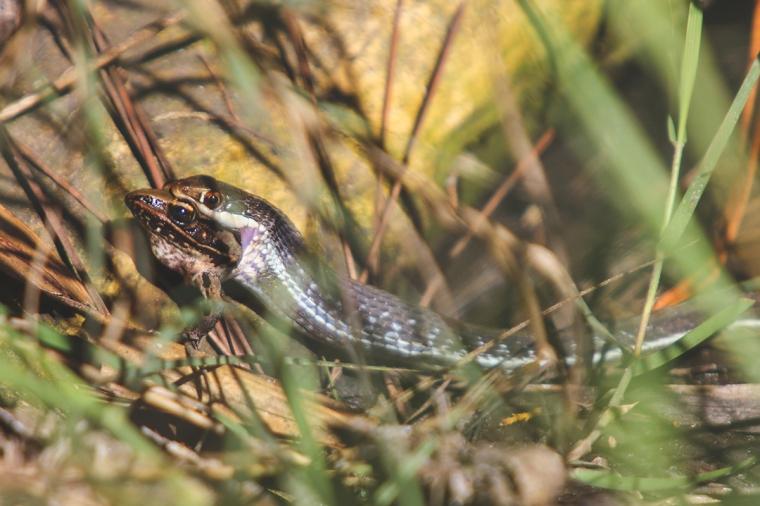 !snake_post