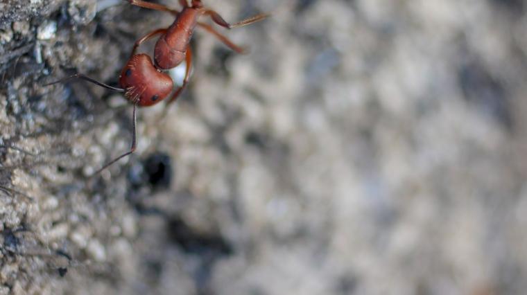 !Ant 3