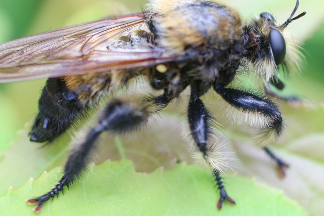 Bee Killer | May 7 | Alice Mary Herden