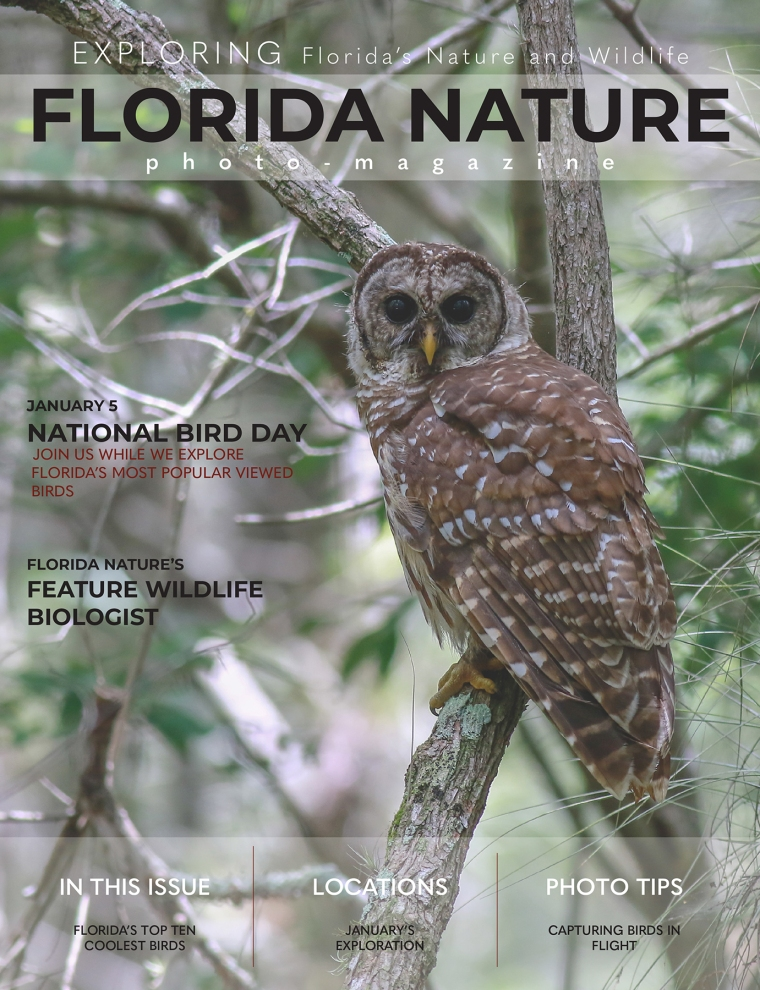 Florida Nature cover owl.jpg