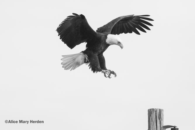 !Eagle.jpg