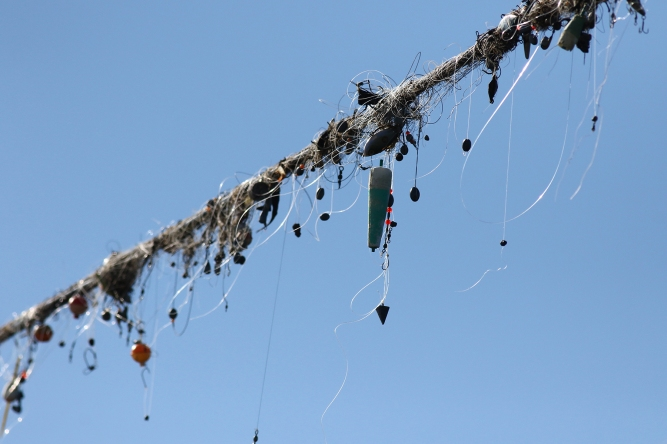 fishing lures hanging from power line