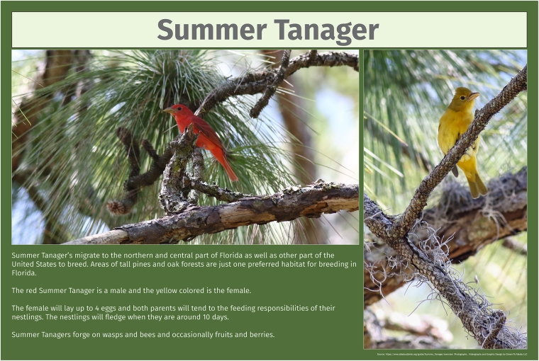 Summer Tanager-small