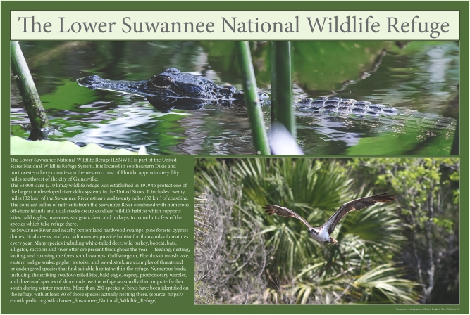 The Lower Suwannee National Wildlife Refuge-pic_small