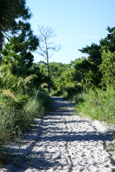 Maritime Forest | Honeymoon Island