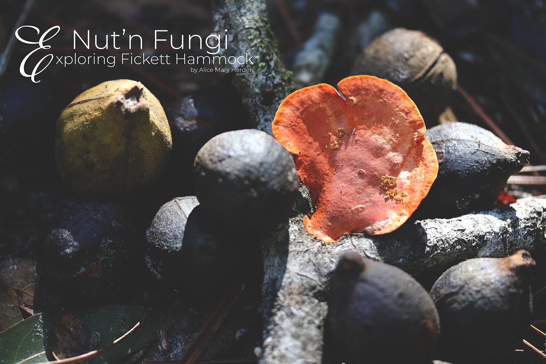 Nut'n Fungi- Exploring Fickett Hammock