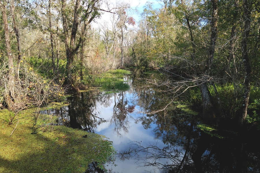Brooker Creek Nature Preserve and Educational Center