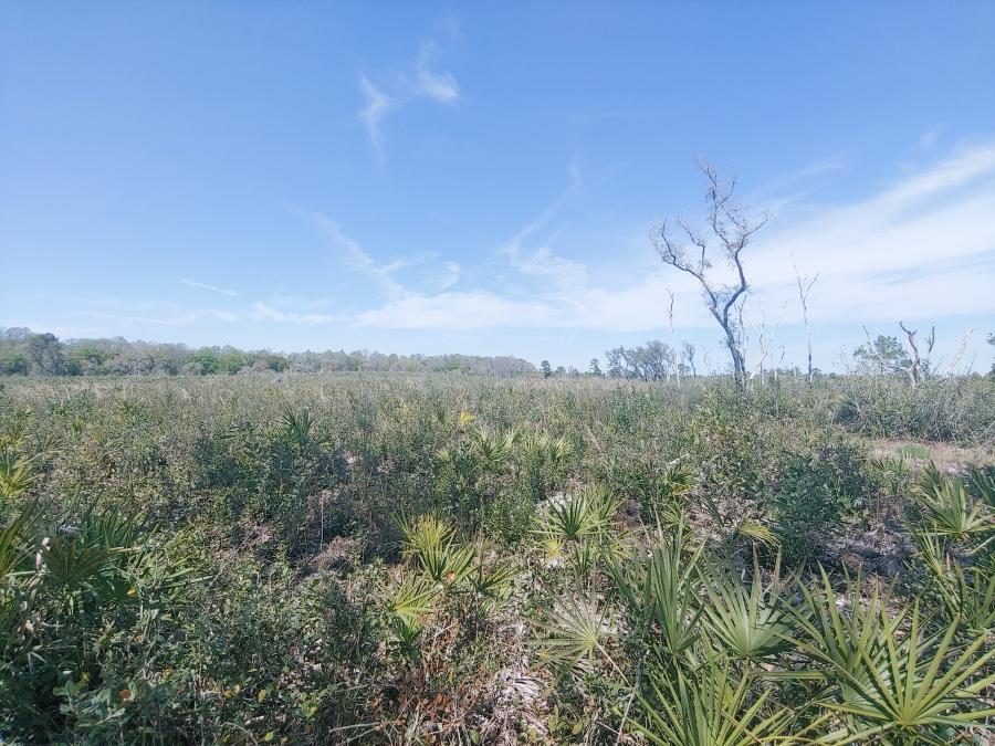 Cypress Lakes Preserve