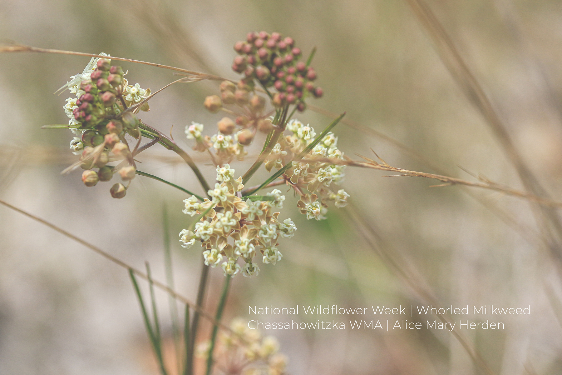 National Wildflower Week – Day Three and Four